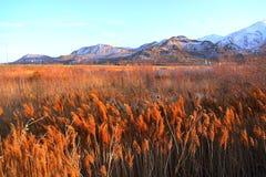El campo herboso de Salt Lake City Imagenes de archivo
