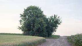 El campo hermoso con los campos de trigo verdes ajardina imagen de archivo