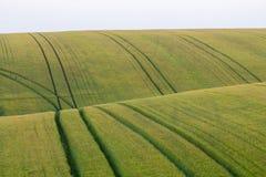 El campo hermoso con los campos de trigo verdes ajardina fotos de archivo libres de regalías