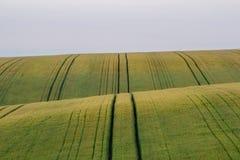 El campo hermoso con los campos de trigo verdes ajardina foto de archivo
