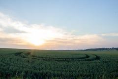 El campo hermoso con los campos de trigo verdes ajardina fotos de archivo