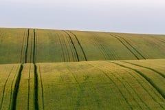 El campo hermoso con los campos de trigo verdes ajardina fotografía de archivo