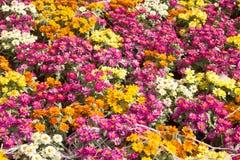 El campo ilimitado, jardín colorido floreciente foto de archivo libre de regalías