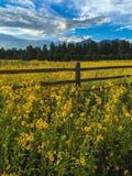 El campo llenó de los wildflowers debajo de un pico de montaña imagen de archivo