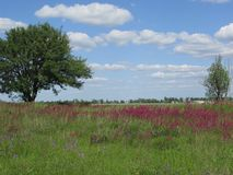 El campo más hermoso de Ucrania es muchos colores y belleza fotografía de archivo