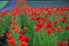El campo multicolor Imagenes de archivo