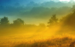 El campo por la mañana con niebla fotografía de archivo