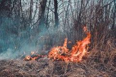 El campo quema la hierba seca, es ambientalmente peligroso, contaminación del ambiente y el aire, la destrucción de la flora imágenes de archivo libres de regalías