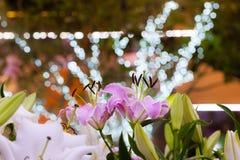 El campo rosado del lirio y el fondo ligero del bokeh en la noche cultivan un huerto Fotos de archivo libres de regalías