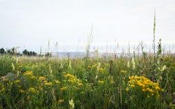 El campo salvaje florece en la estepa de Siberia Imagenes de archivo