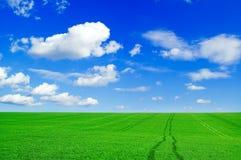 El campo verde. Imágenes de archivo libres de regalías