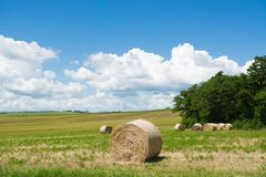 El campo verde en Cortona, Toscana Foto de archivo libre de regalías
