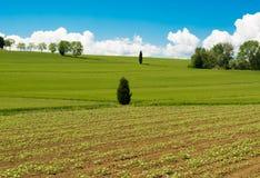 El campo verde en Cortona, Toscana Foto de archivo