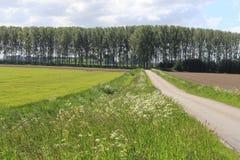 El campo verde fresco en Holanda en la sol de la primavera Foto de archivo libre de regalías