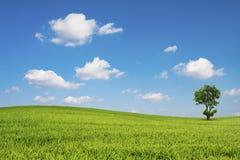 El campo y el árbol verdes con el cielo azul se nublan Imagen de archivo