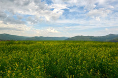 El campo y el paisaje de las nubes Fotografía de archivo libre de regalías