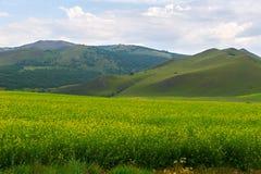 El campo y las montañas de flores Fotos de archivo