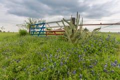 El campo y Tejas del Bluebonnet señalan la puerta por medio de una bandera en el campo de Ennis, TX Imagenes de archivo
