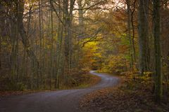 El canal del camino el papel pintado del bosque del otoño fotografía de archivo libre de regalías