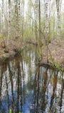 El canal estrecho atraviesa el bosque de los abedules Fotografía de archivo libre de regalías