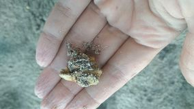 El cangrejo de ermitaño en la playa a mano sale de cáscara almacen de video