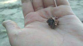 El cangrejo de ermitaño en la playa a mano sale de cáscara metrajes