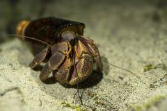 El cangrejo de ermitaño grande Paguroidea o el Soldado-cangrejo encontró el nuevo hogar en la botella de cristal quebrada La ecol Fotografía de archivo libre de regalías