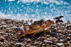 El cangrejo en el océano salpica Imagen de archivo libre de regalías