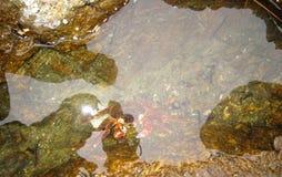 El cangrejo en la roca en la bahía de huizhou daya Imágenes de archivo libres de regalías