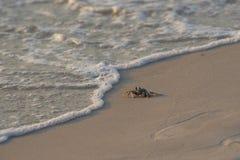 El cangrejo que camina a lo largo de la playa con las burbujas del mar agita fotografía de archivo