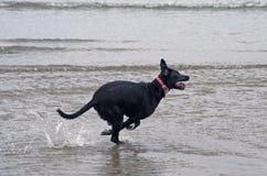 El canguro le gusta el perro Fotos de archivo