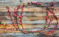 El capítulo del melocotón ramifica con las flores rosadas en un fondo de madera de tableros del granero con el espacio para el te Foto de archivo