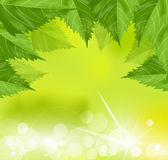 El capítulo del verde se va en un fondo verde Imagen de archivo libre de regalías