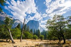 El Capitan在有树的优胜美地在前景 库存图片