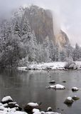 EL Capitan ed alberi dello Snowy Immagine Stock