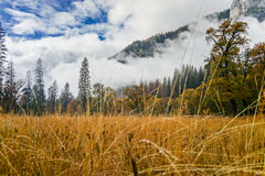 El Capitan Meadow with tall yellow grass. At Yosemite National Park Stock Photos