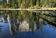 El Capitan reflected in the Merced River, Yosemite National Park, California, USA Stock Images