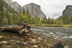 EL Capitan und Merced Fluss-Zeder Stockfotos