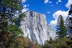 El Capitan - Yosemite. A beautiful tree framed view of the sheer granite face of El Capitan in Yosemite Valley, California Royalty Free Stock Images