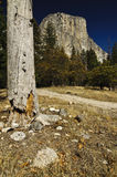 El Capitan in Yosemite National Park Stock Photos