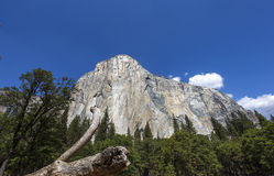 El Capitan, Yosemite national park, California, usa Royalty Free Stock Images