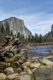 El Capitan from Merced River. El Capitan at Yosemite National Park with Merced River and Boulders along shore stock photography