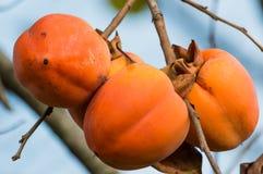 El caqui de la fruta Imagen de archivo