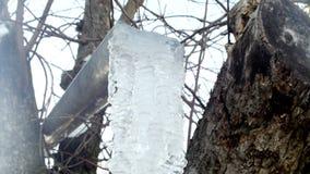 El carámbano en un árbol, hielo decae, invierno almacen de metraje de vídeo