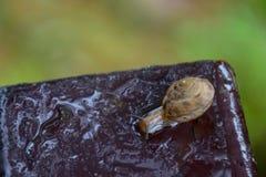 El caracol caminaba en la placa de acero en el jardín foto de archivo