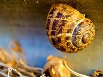 El caracol cuelga sobre las hojas secadas Foto de archivo libre de regalías