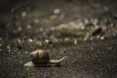 El caracol está en el camino Fotografía de archivo