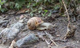 El caracol está viajando Fotografía de archivo libre de regalías