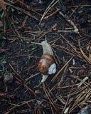 El caracol no necesita los paraguas fotografía de archivo libre de regalías