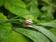 El caracol se arrastra después de lluvia Imagenes de archivo
